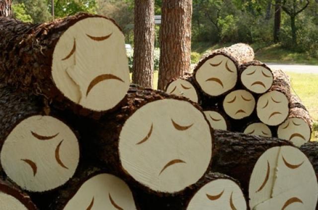 Путин разрешил вырубать леса на Байкале