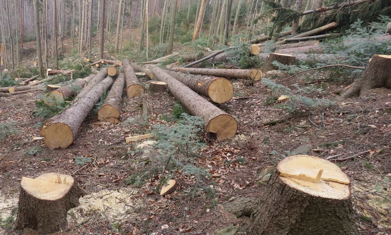 Вячеслав Мархаев выступил против сплошной вырубки леса на Байкале