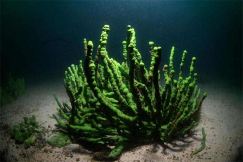 Байкал теряет прозрачность из-за вымирания губок